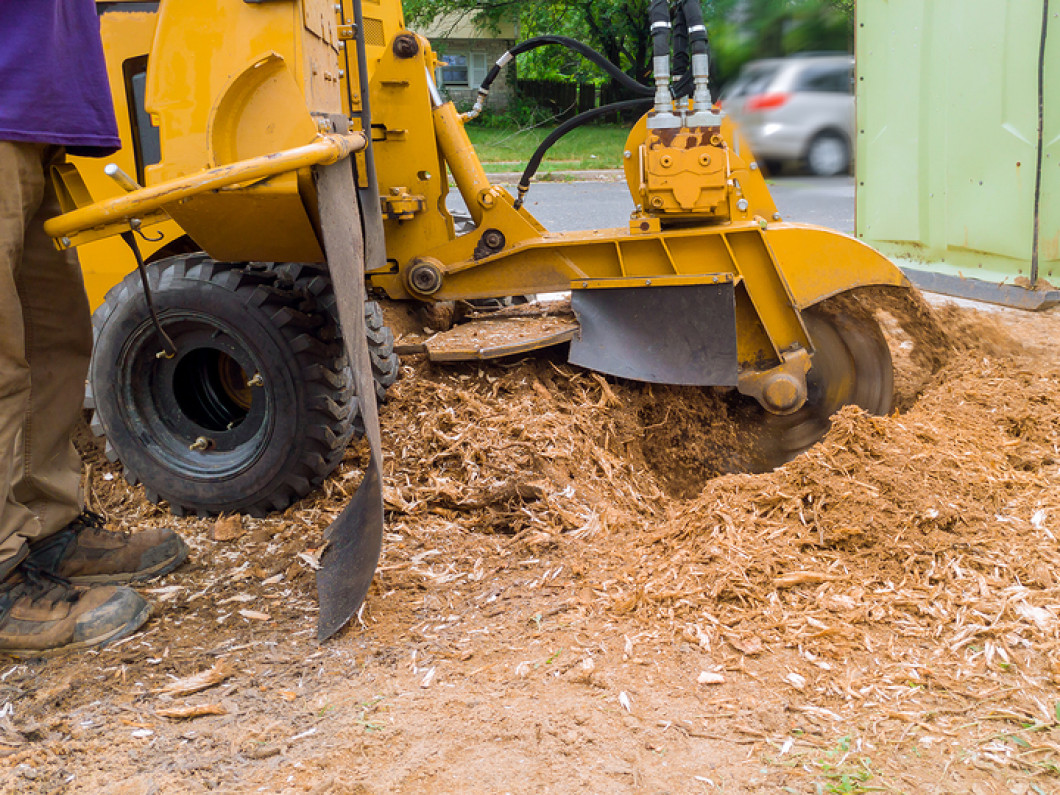 Connect with a qualified stump grinding company
